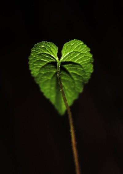Earth_Love