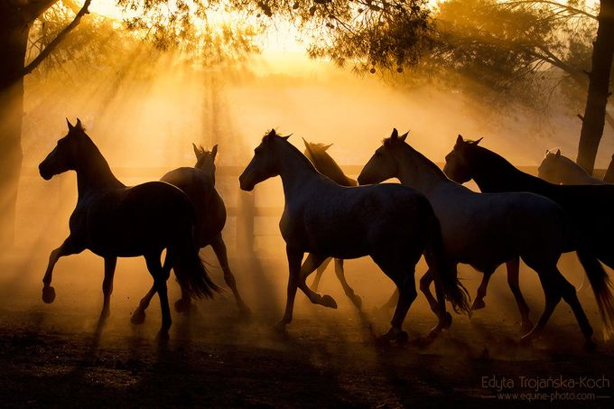 Andalusians herd sunset Spain by edytatrojaskakoch - Visual Poetry Photo Contest
