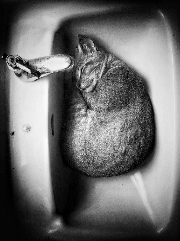 Sleeping beauty by asyrafariffin - Only Pets Photo Contest
