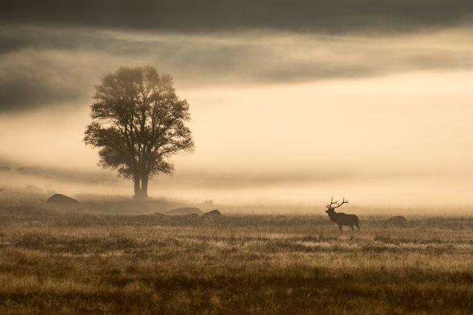 Daybreak by RickAustin - Celebrating Nature Photo Contest Vol 3