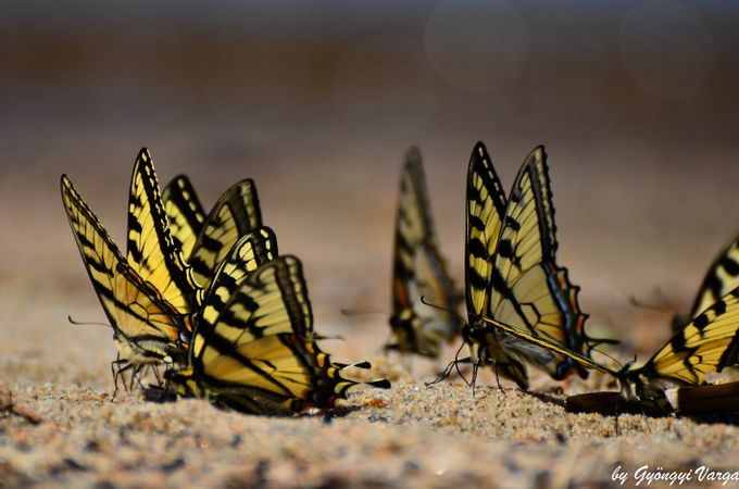 Butterflies by Incana - Beautiful Butterflies Photo Contest