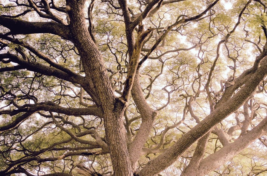 Interesting branches will lead you to deep into the sky