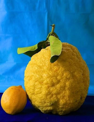Texas Lemon