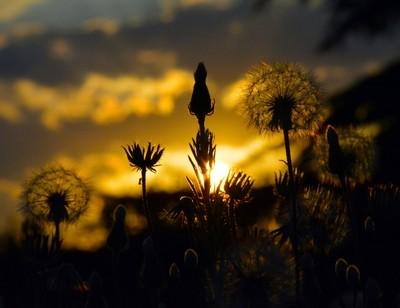 Last sunbeam