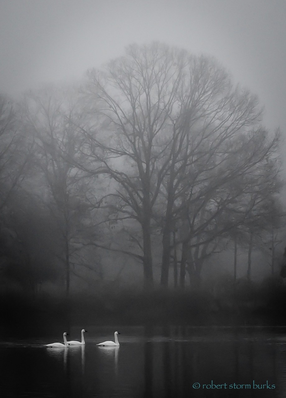"""""""Winter Silence"""" by StormPath - Silhouettes Of Trees Photo Contest"""