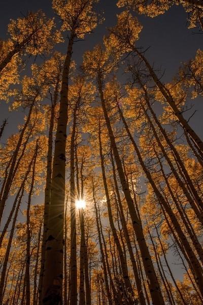 Aspen sunset