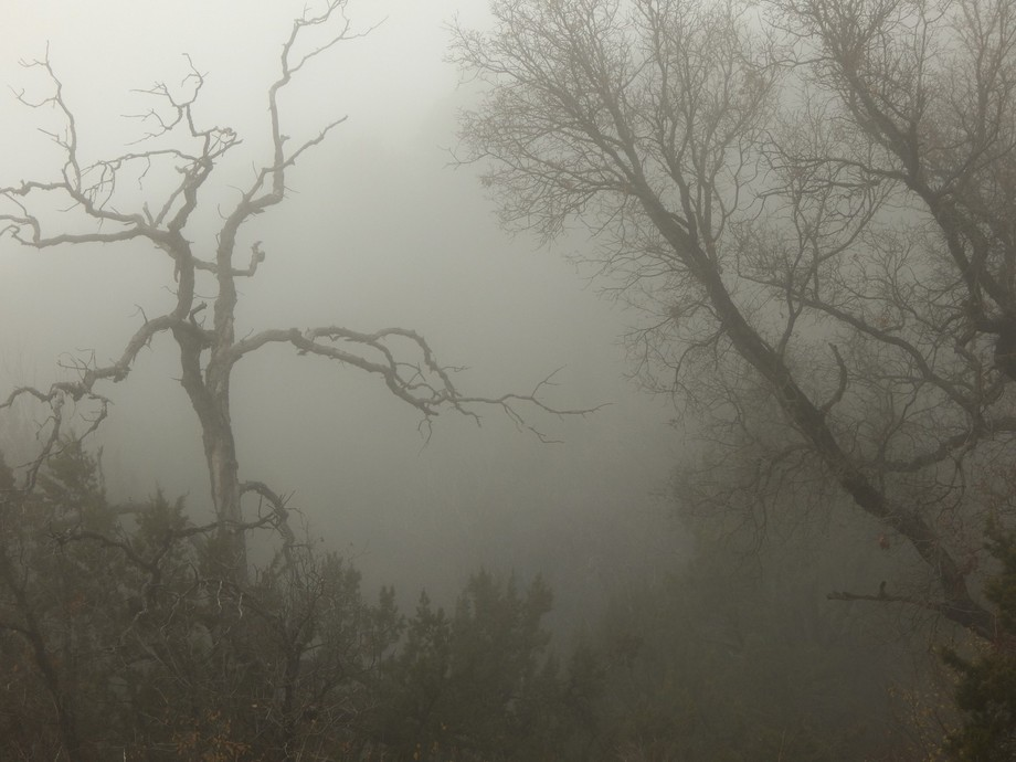 Eerie fog in the forest.  Prints available here: http://www.redbubble.com/people/dpennie/works/18...