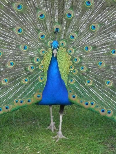 Patrick Peacock