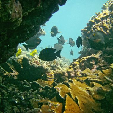 Assorted residents of a coral canyon on Molokai, Hawaii's fringing reef.