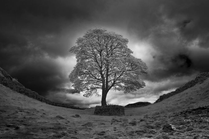 Sycamore Gap  by Blackton - Silhouettes Of Trees Photo Contest