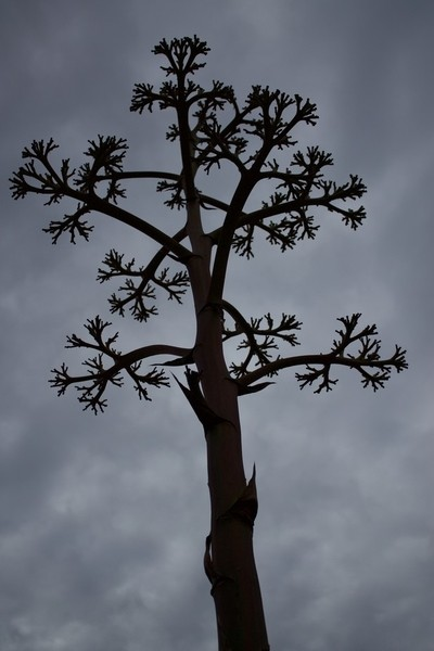 Dead Tree on a Cloudy Day