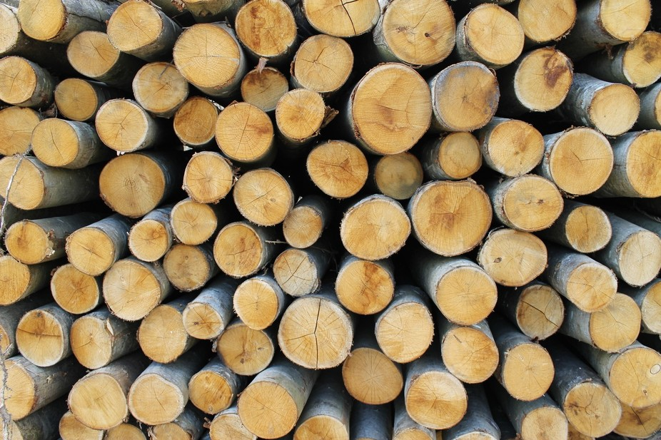 This photo is not as it seems. This pile of logs is the result of some intensive conservation wor...