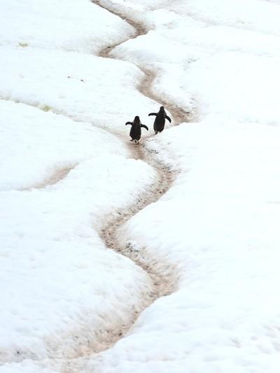 Walking the road often travelled            Antartika04713
