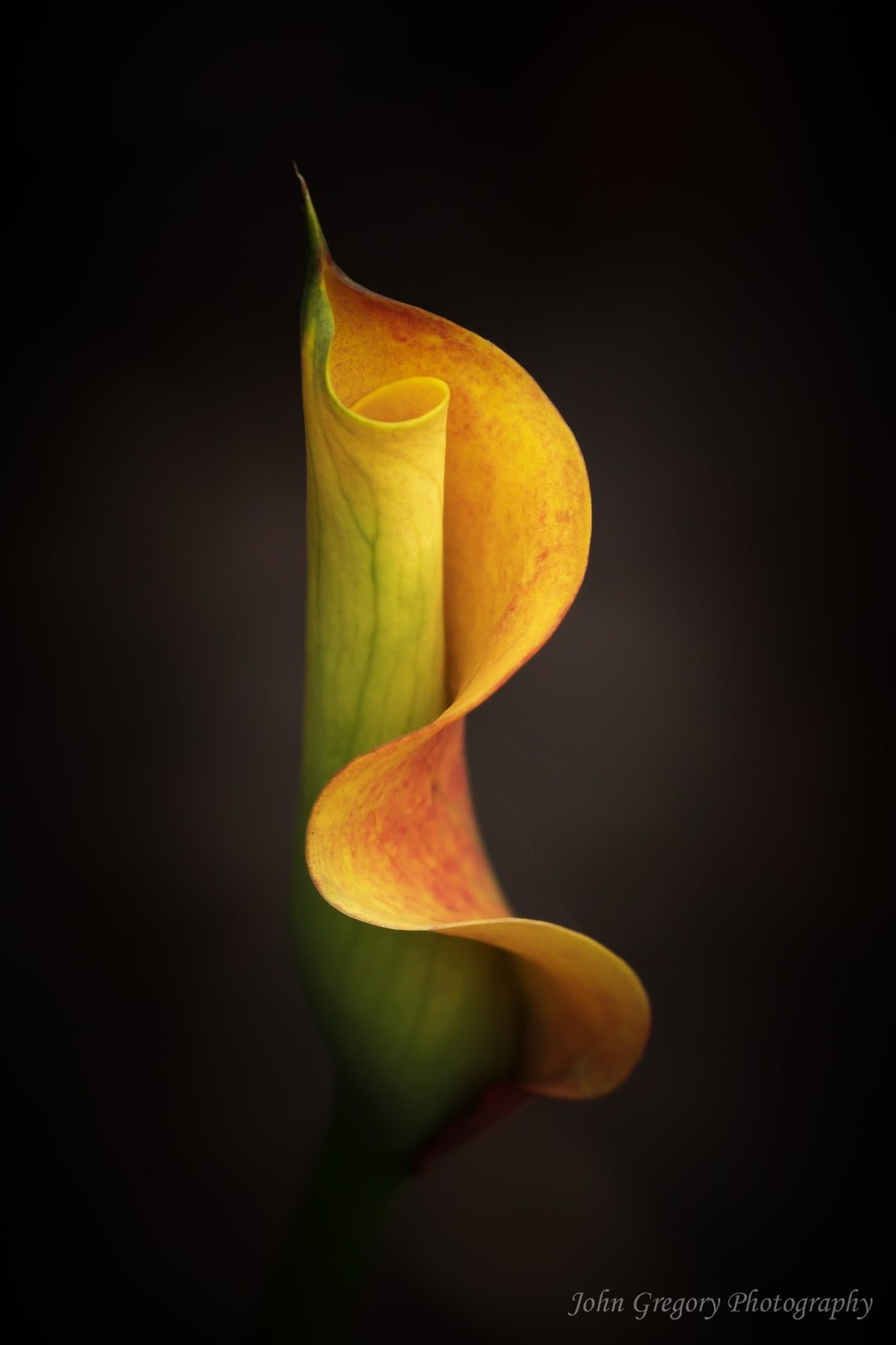New Lily by johngregory - Yellow Beauty Photo Contest