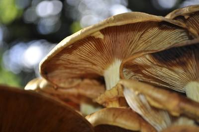 Under a Mushroom