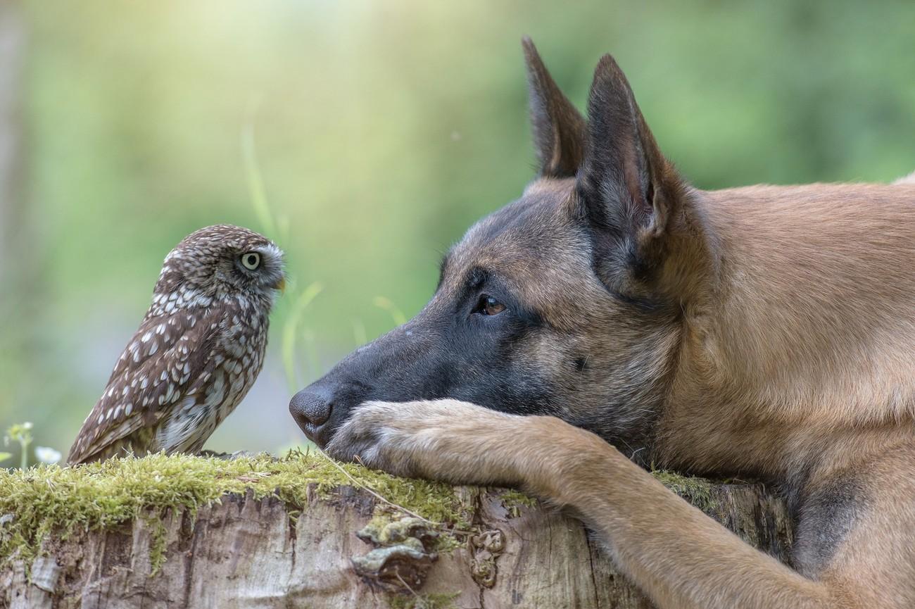 7 Top Animal Photography Tips