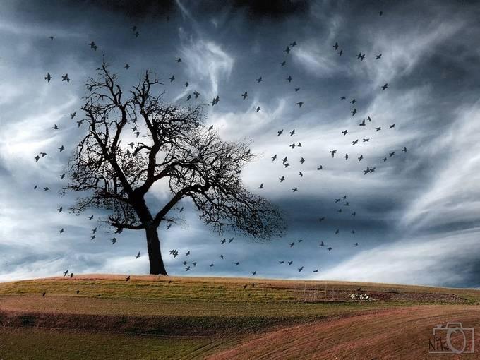 20151108-DSCF9905abc by nikosladic - Tree Silhouettes Photo Contest
