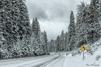 Snowy_Road_In_Forest