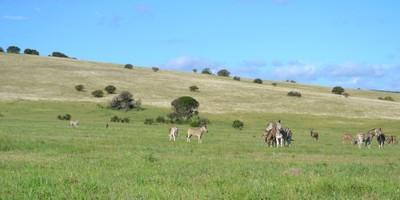 Grassland tranquility