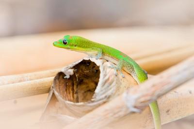 Adorable Gecko