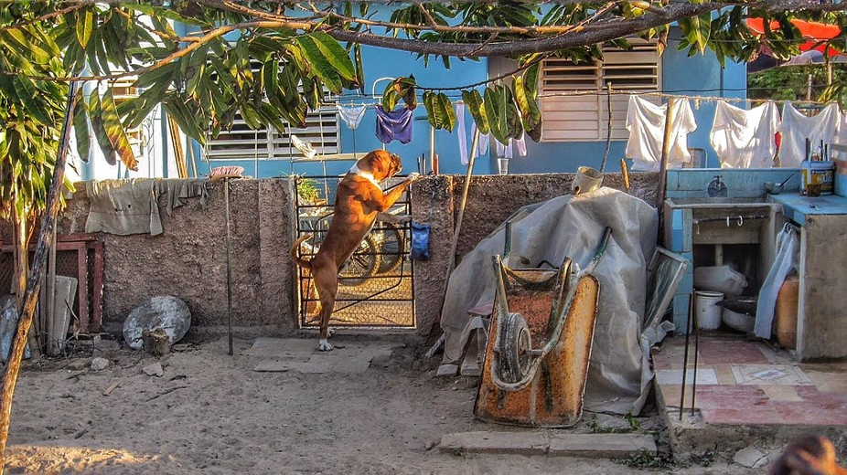 Walking around Varadero , Cuba. This dog got my attention and I just loved the looks of the yard.