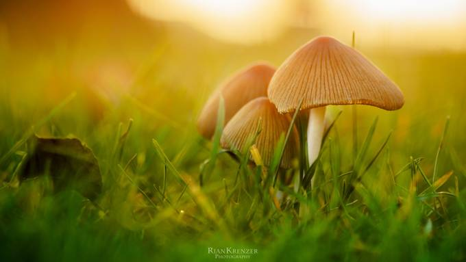 autumn sun by riankrenzer - Small Things In Nature Photo Contest