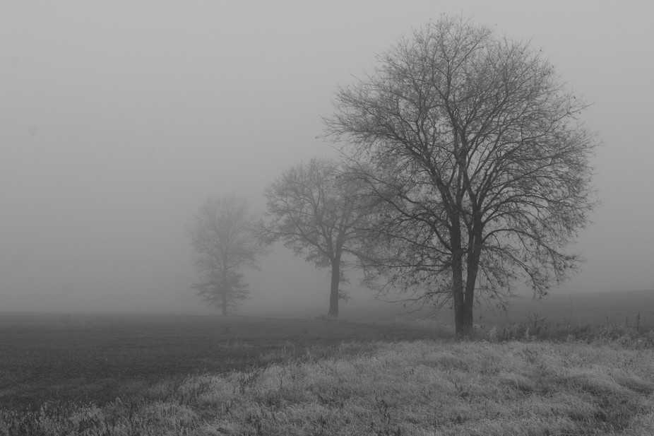Trees in a freezing fog!