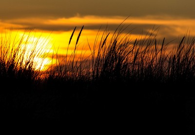 sunset by the sand dunes