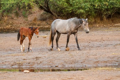 Foal and Mom at the river