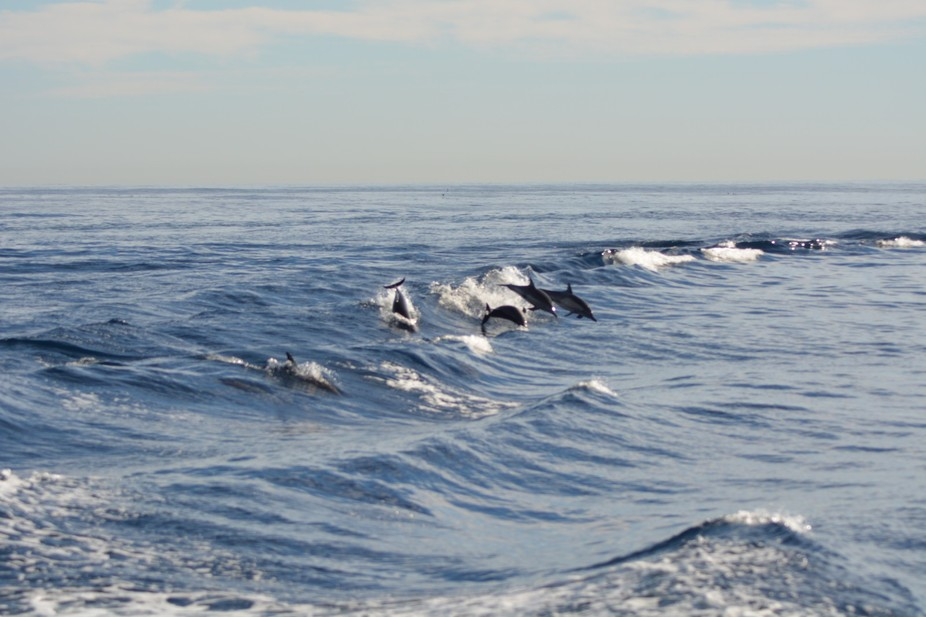 We were on a whale watching boat. The dolphins were playing in the boats wake. I am using Nikon D...