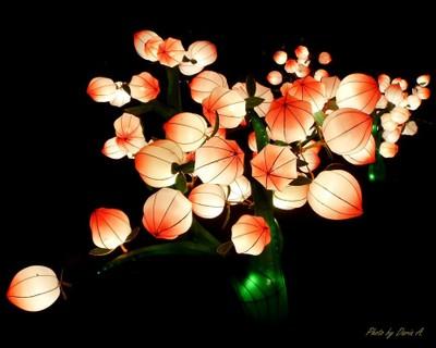 Peach Lanterns
