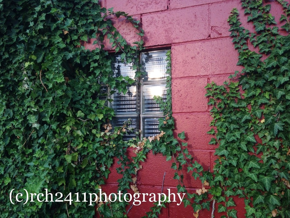 Vines running over a red brick walled building, with small window.