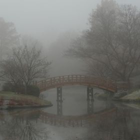 I went to the Missouri Botanical Garden over the weekend and found the Japanese Garden bathed in fog.  It is the first time in all my visits to t...