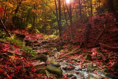 Tiffany Forest