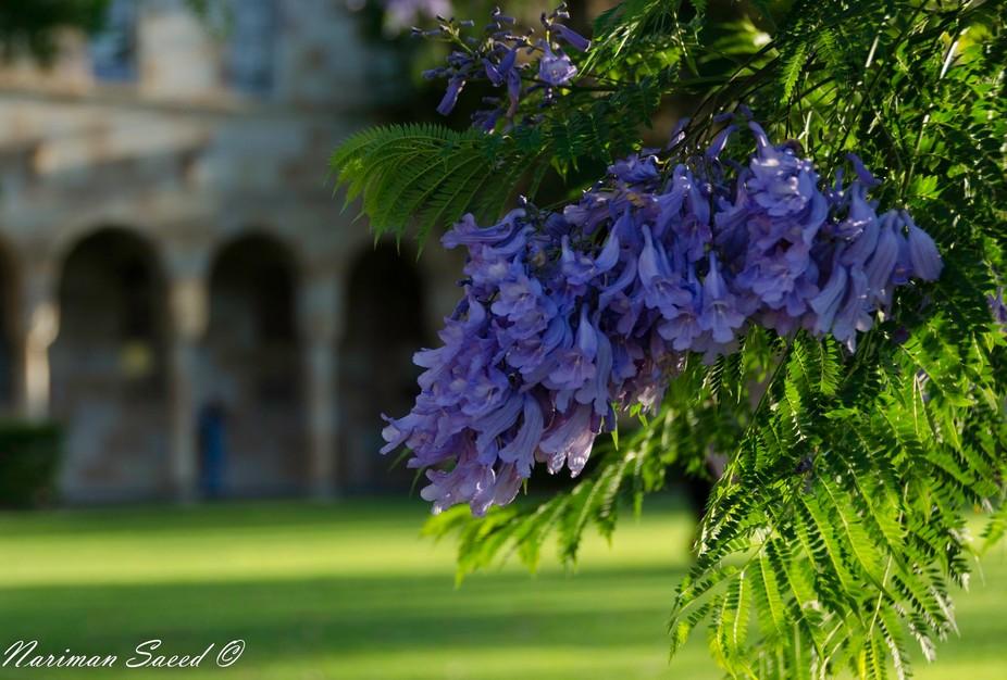 spring @ The university of Queensland