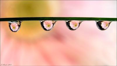 Flower drop reflections