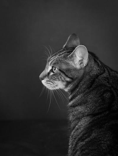 Roxie in profile