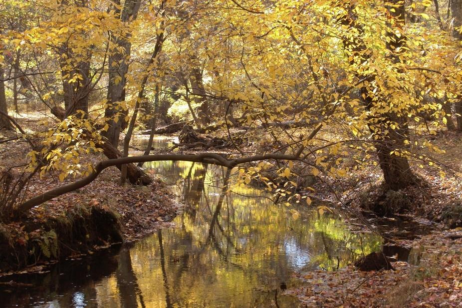 Fall in Allaire, NJ