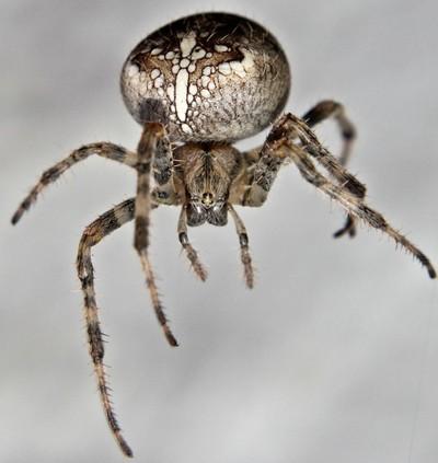 My Special Spider! copy