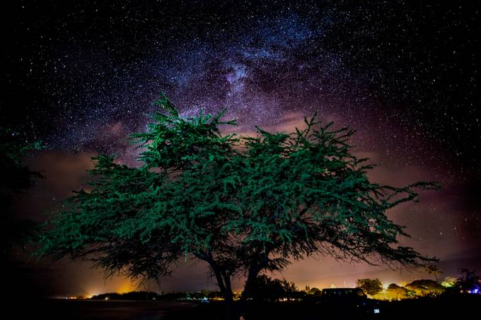late night tree viewbug by islandbug - Experimental Light Photo Contest