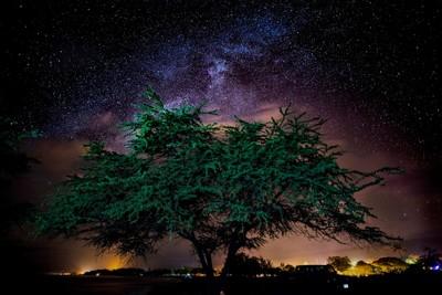 late night tree viewbug
