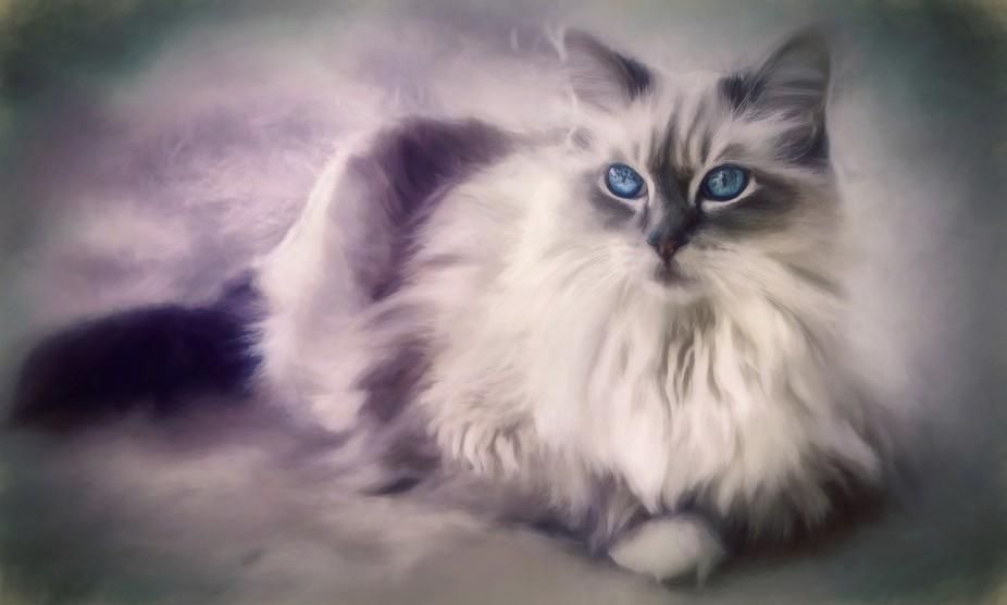 A soft painterly portrait of a cat.