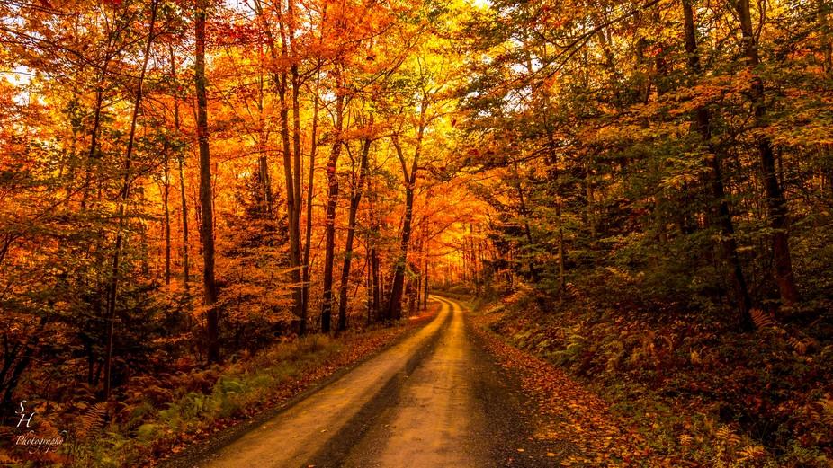Dirt road in Pennsylvania.