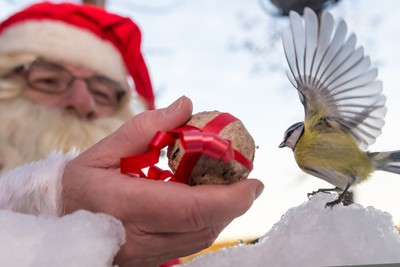 Christmas gift for a bird