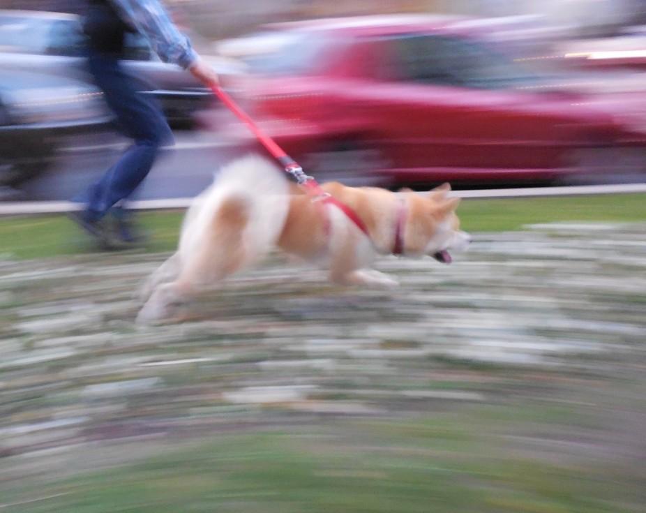 Yuki fuga, fuga