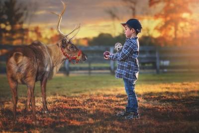 An Apple for the Reindeer