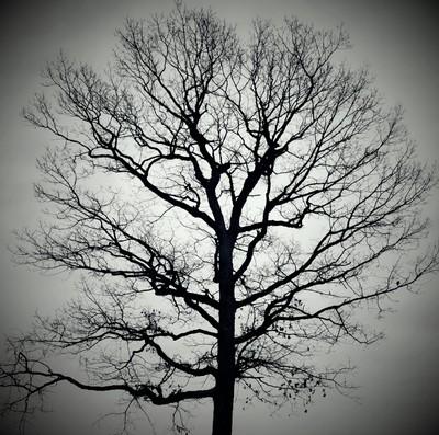 Winter Emptiness