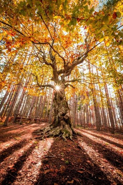 Gouden herfst door Theo-Herbots-Fotograaf