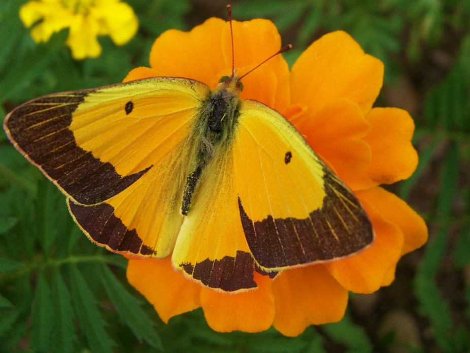 Taken at Butterfly World in Coconut Creek Florida! Butterfly World is located in Tradewinds Park,...