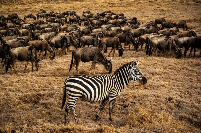 A Dazzling Implausibility by mpelli - Explore Africa Photo Contest